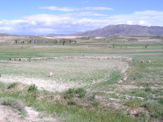 La fauna y flora de las estepas murcianas son �nicas en Europa (2007), Foto 1